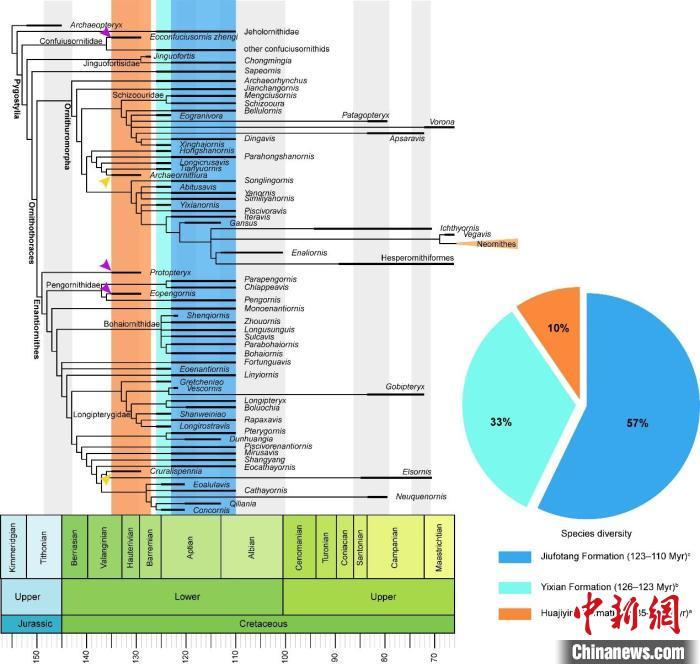 最新研究:热河生物群演化与华北克拉通破坏有时空关联
