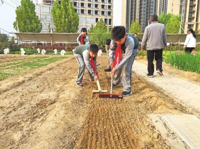 """河南中小学开展多种形式劳动教育 课堂搬到""""田野""""上"""